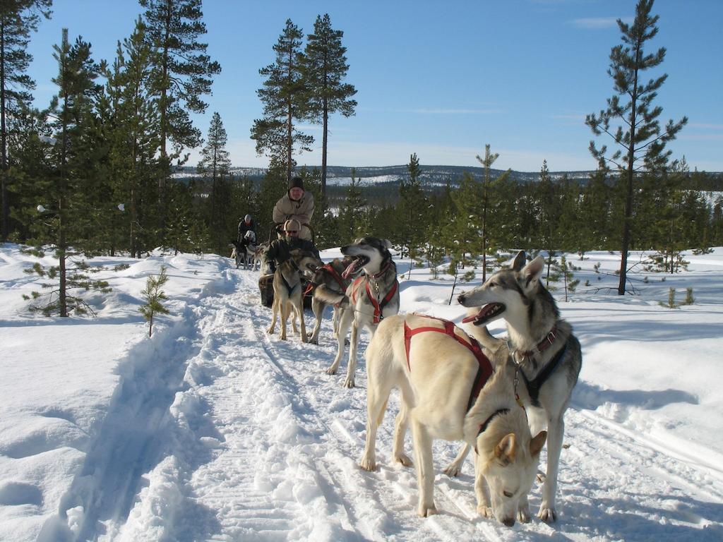 волонтерский проект, путешествие в Финляндию